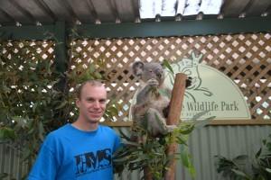 best shirts koala
